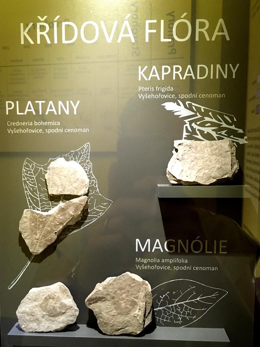 Ukázka z vitríny